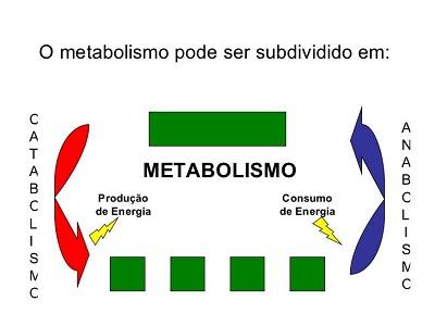 Duas forma do metabolismo